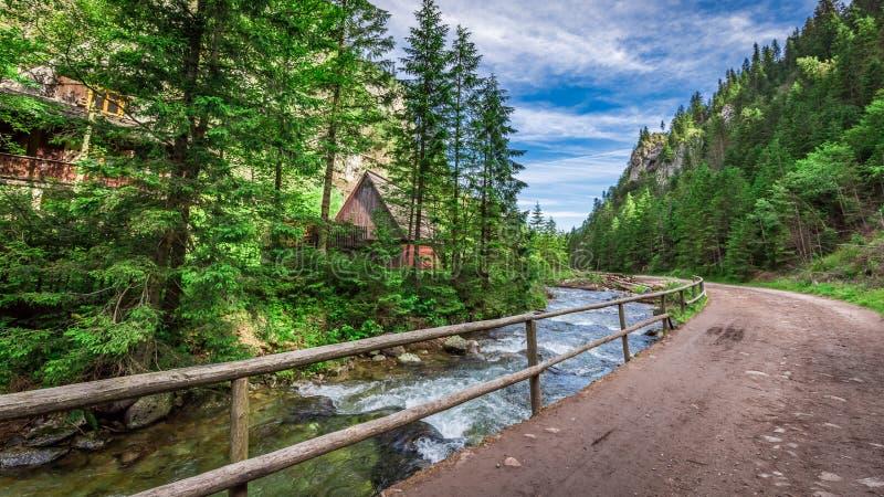 Rastro de montaña por el río en las montañas de Tatras fotos de archivo