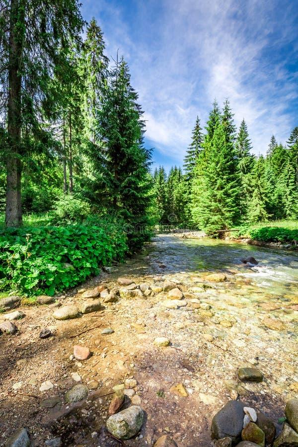 Rastro de montaña por el río en las montañas de Tatras, Polonia imagen de archivo libre de regalías