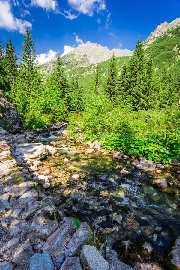 Rastro de montaña por la corriente en día soleado fotos de archivo