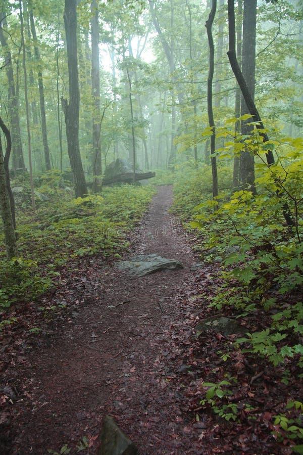 Rastro del bosque imagen de archivo libre de regalías
