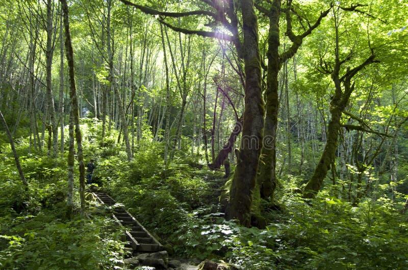 Download Rastro Del Bosque De La Montaña Foto de archivo - Imagen de camino, árboles: 41902710