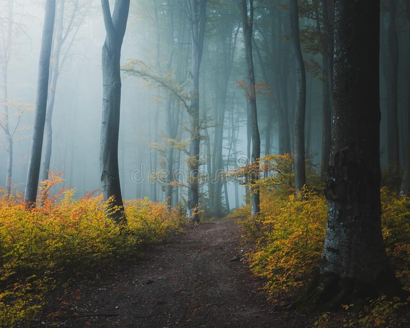 Rastro del cuento de hadas en la luz de niebla mística del bosque que entra en el bosque imagen de archivo
