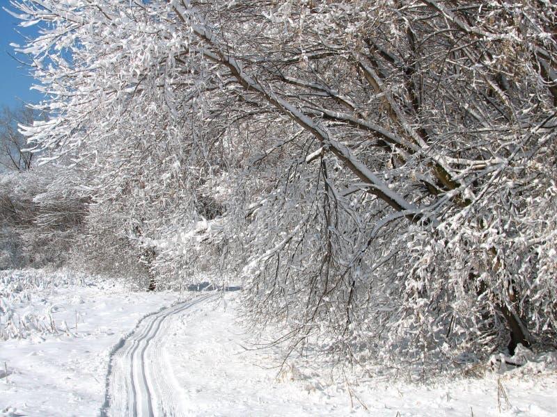 Rastro del esquí imagen de archivo