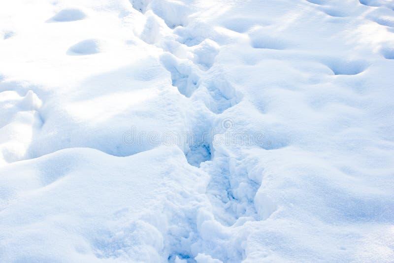 Rastro del invierno fotos de archivo