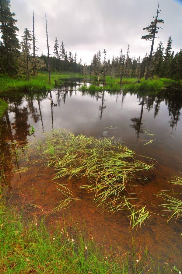 Rastro del lago Elsner imagen de archivo