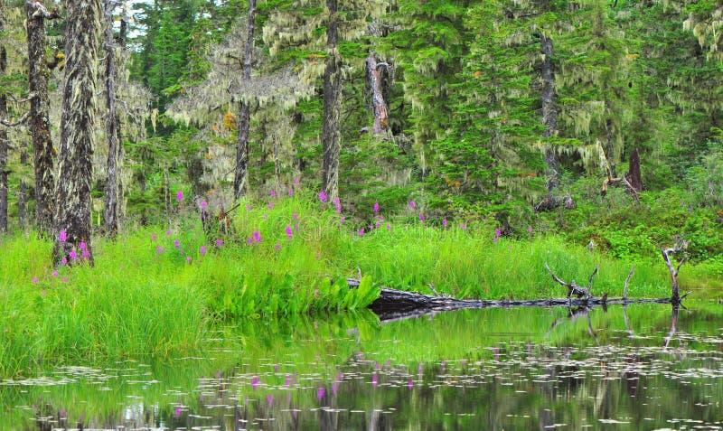 Rastro del lago Elsner foto de archivo