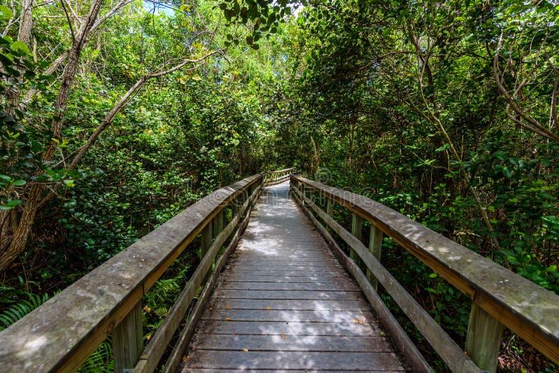 Rastro del limbo del Gumbo del parque nacional de los marismas r La Florida, los E fotos de archivo libres de regalías