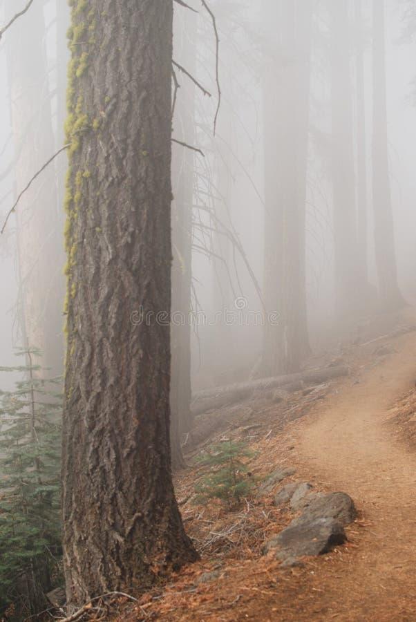Rastro del misterio a través del bosque foto de archivo libre de regalías