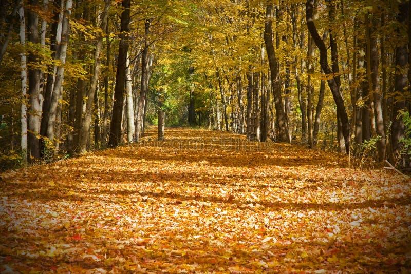 Rastro del otoño fotos de archivo libres de regalías