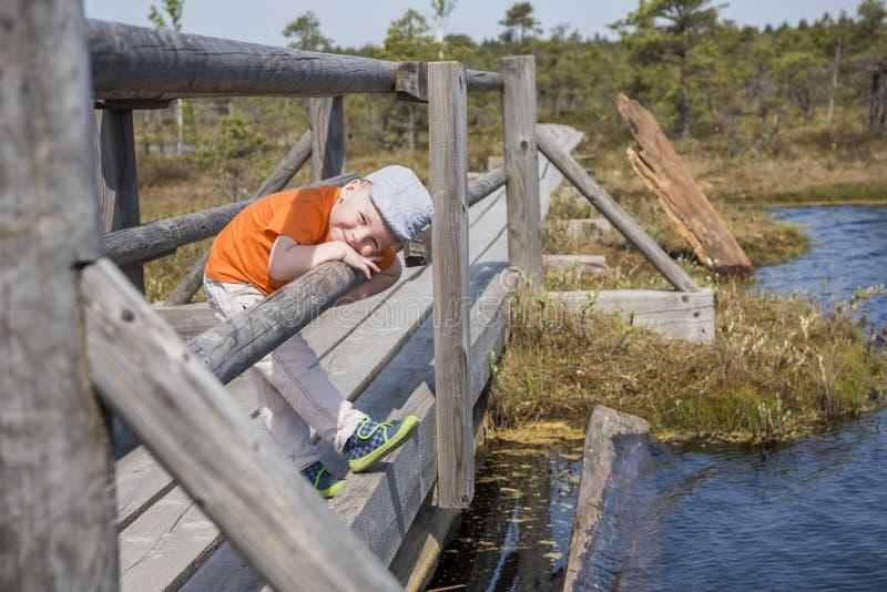 Rastro del pantano D?a asoleado del verano Sendero del parque nacional de Kemeri Peque?a bah?a en el camino de madera del rastro imagen de archivo