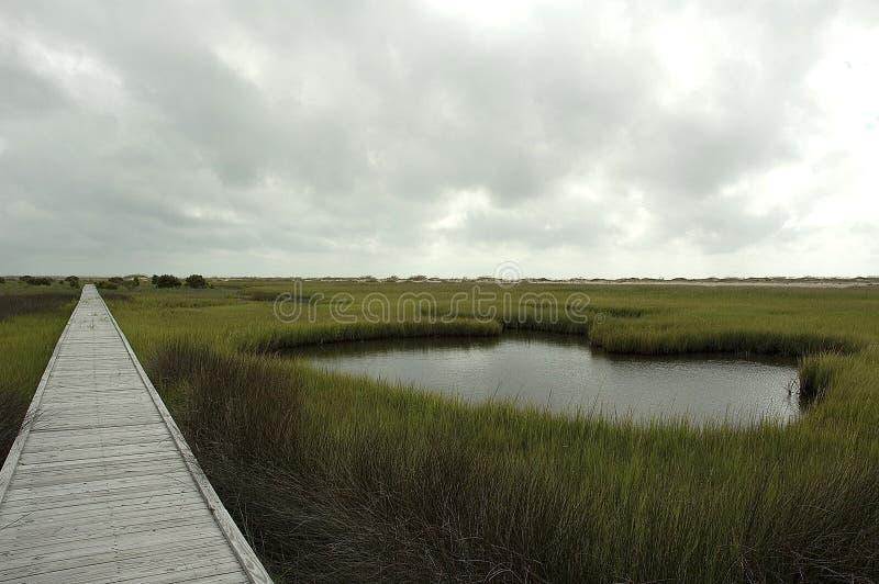 Rastro del pantano de sal imagen de archivo