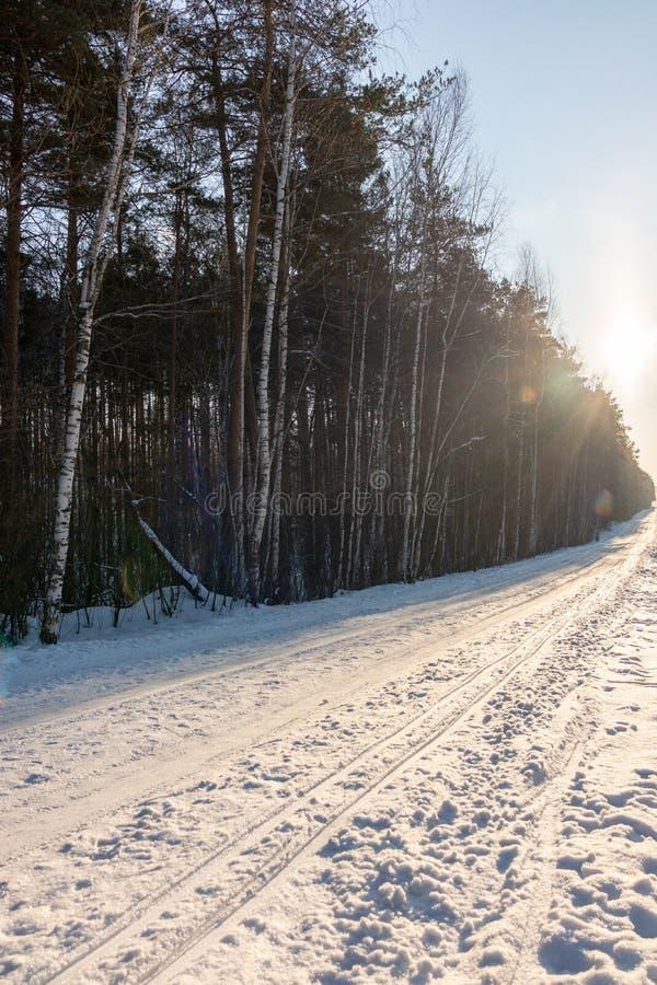 Rastro directo del esquí en el bosque del invierno en el día soleado imagenes de archivo