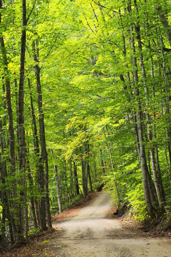 Rastro en bosque verde imagen de archivo