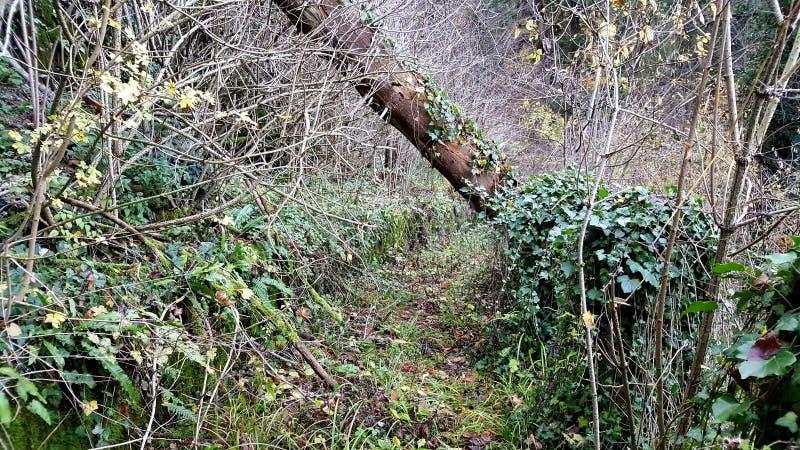 Rastro overgrown del bosque fotos de archivo