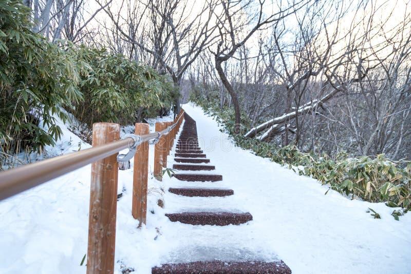 Rastro que camina en el valle de Jigokudani o del infierno, durante invierno foto de archivo libre de regalías