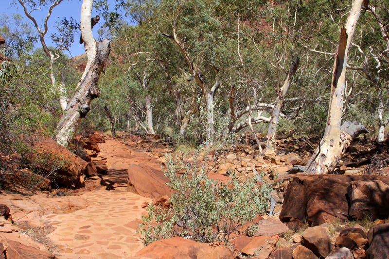 Rastro que camina en reyes Canyon, parque nacional de Watarrka, Australia imágenes de archivo libres de regalías