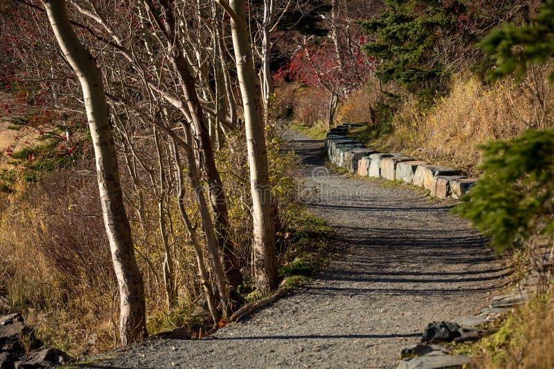 Rastro que camina Groomed en el ` s, Terranova y Labrador de St John imagenes de archivo