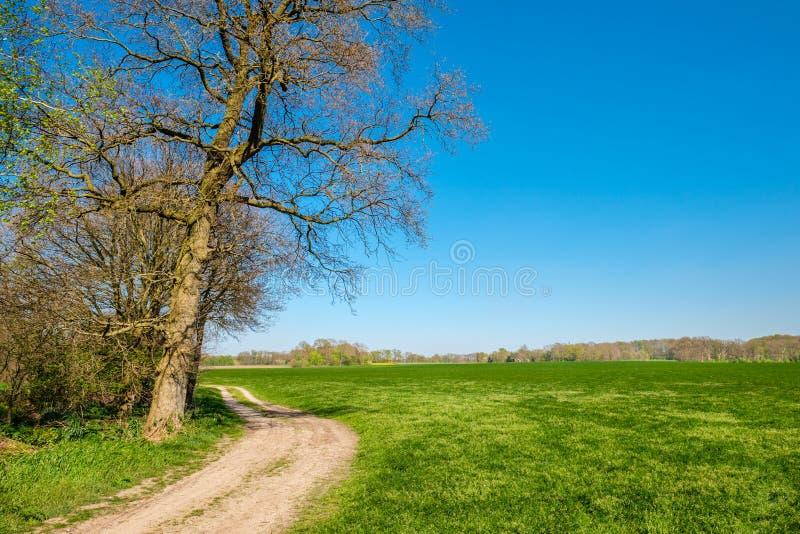 Rastro que camina holandés a lo largo de campos verdes enormes y de pequeños bosques foto de archivo