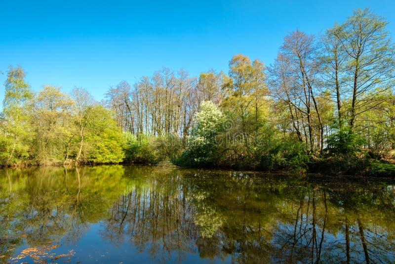 Rastro que camina holandés a lo largo de un lago magnífico y de un pequeño bosque fotografía de archivo