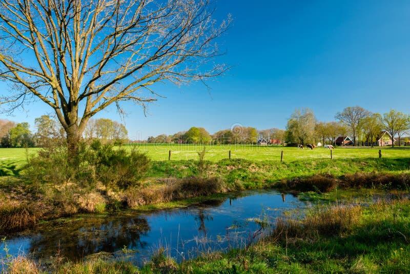 Rastro que camina holand?s a lo largo de campos verdes, de bosques y de un r?o imagen de archivo libre de regalías