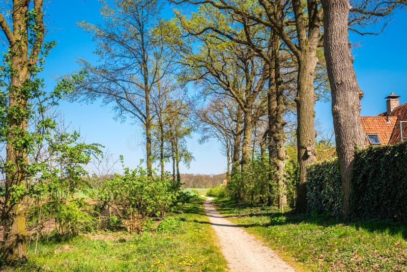 Rastro que camina holand?s a lo largo de campos verdes enormes y de peque?os bosques imagen de archivo libre de regalías