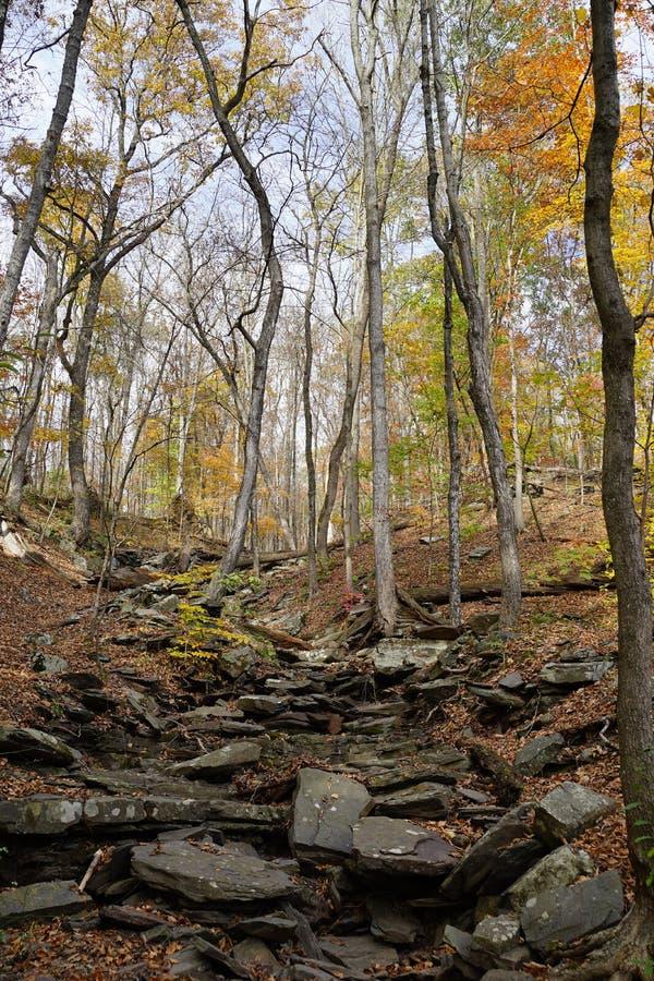 Rastro rocoso a través del bosque de hojas caducas en caída foto de archivo libre de regalías