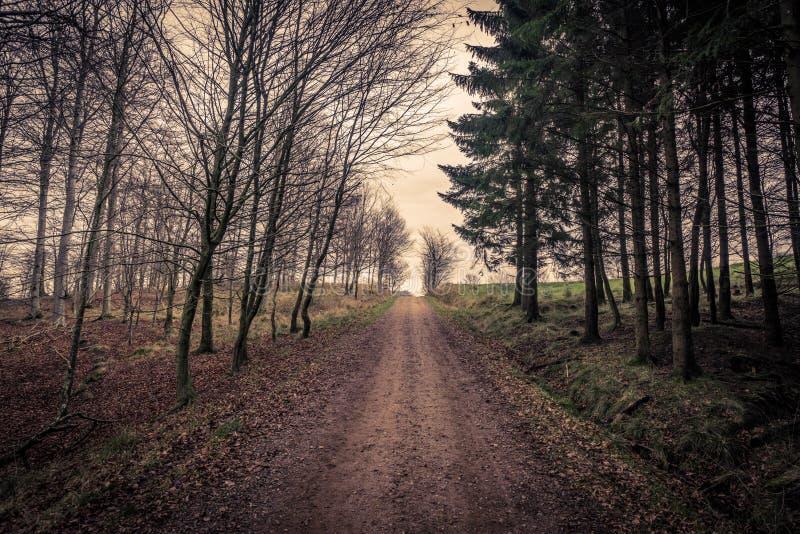 Rastro rodeado por los árboles en un bosque foto de archivo