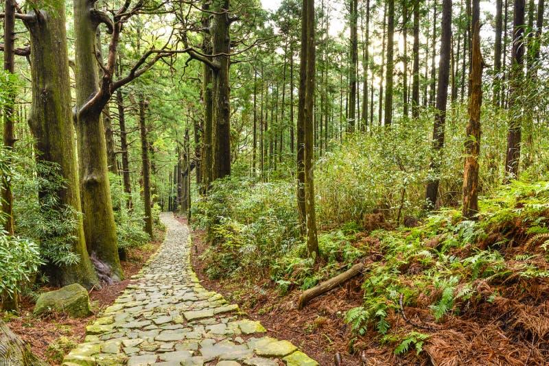 Rastro sagrado del japonés de Kumano Kodo imágenes de archivo libres de regalías