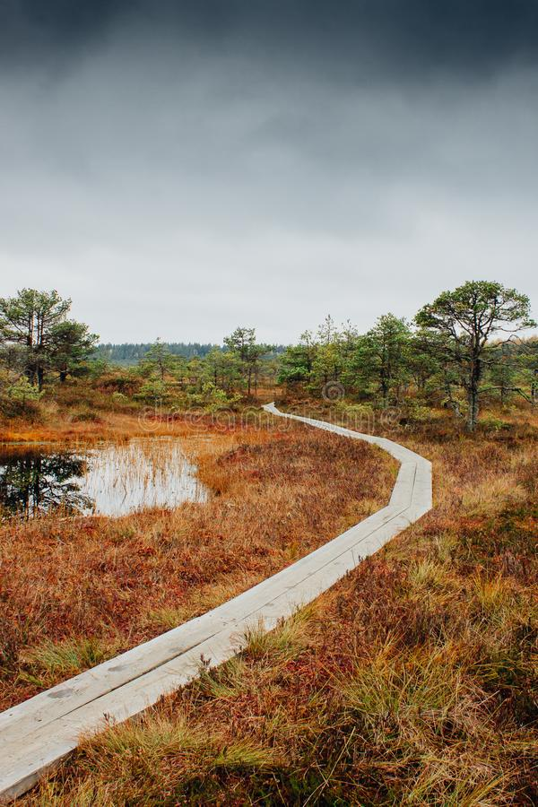 Rastro sobre el pantano Kakerdaja en Estonia fotos de archivo libres de regalías