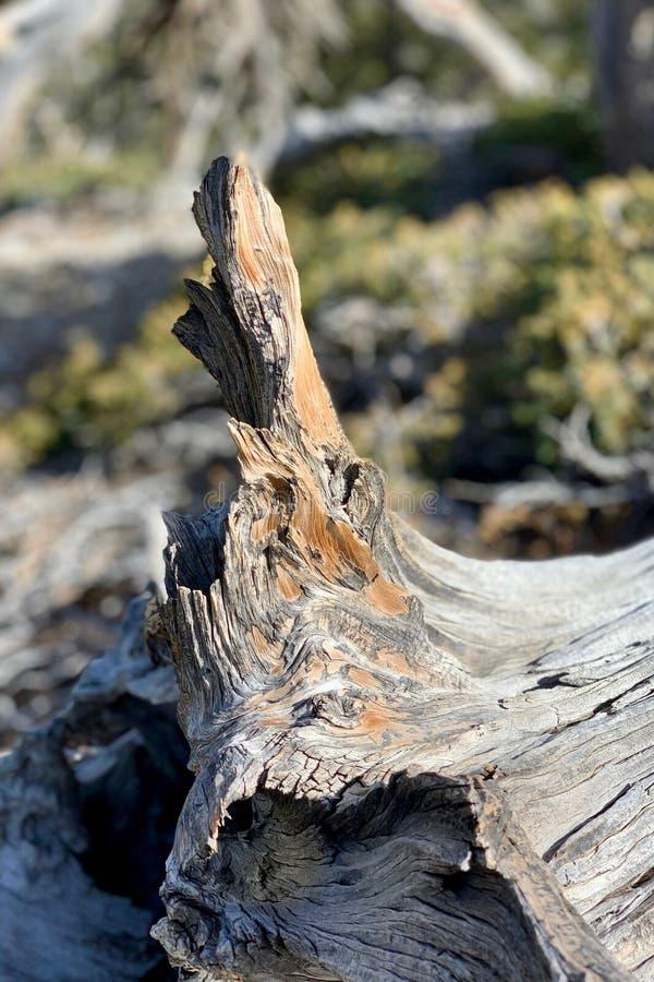 Rastro superior del lazo de Bristlecone, Mt Charleston, Nevada fotografía de archivo