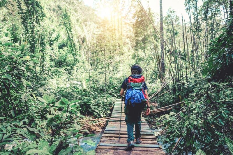Rastro turístico que camina en el hombre del viajero del bosque con cr de la mochila fotos de archivo libres de regalías