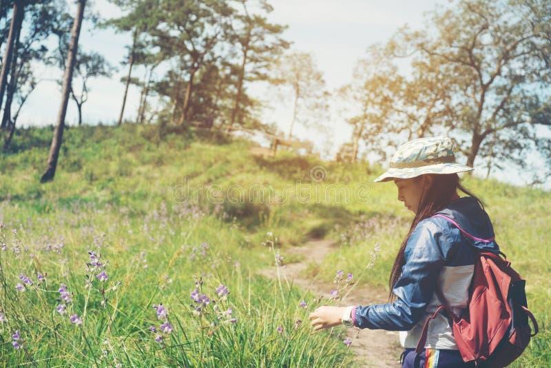 Rastro turístico que camina en la mujer del viajero del bosque con la mochila foto de archivo libre de regalías