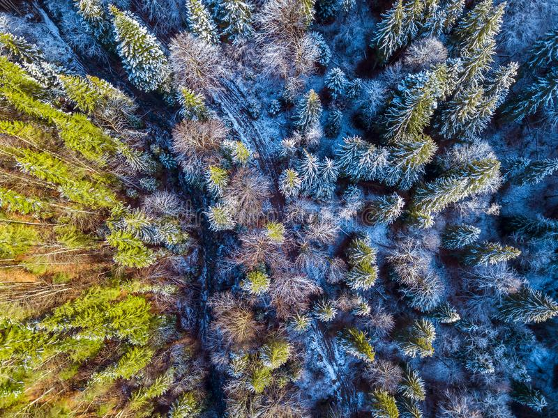 Rastro y nieve en Forest Aerial View Spruce imágenes de archivo libres de regalías