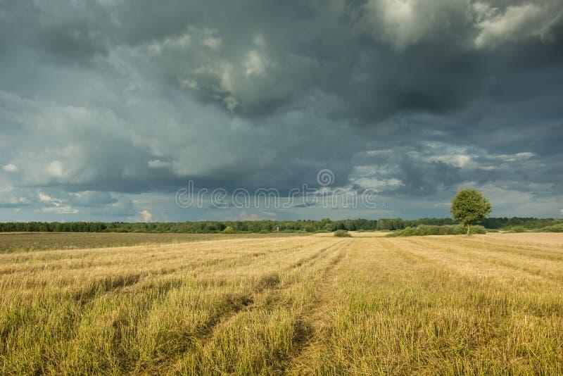 Rastrojo y nubes de tormenta oscuras en el cielo fotos de archivo libres de regalías