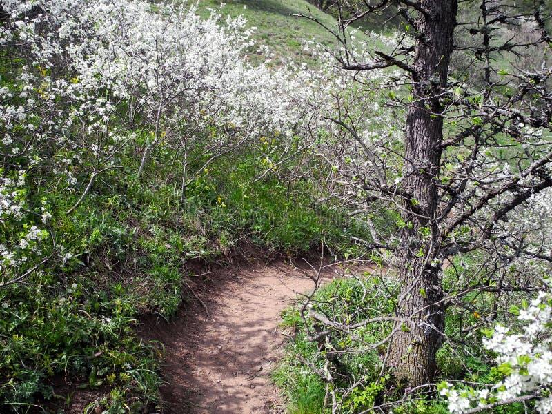 Rastros de la vuelta de la montaña con los arbustos de florecimiento en primavera fotografía de archivo libre de regalías