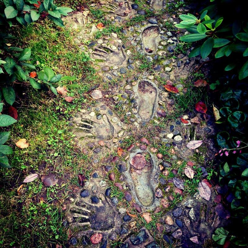 Rastros en el bosque místico imagen de archivo libre de regalías
