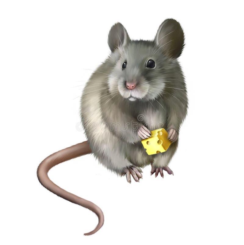 Ratón de casa que come el pedazo de queso ilustración del vector