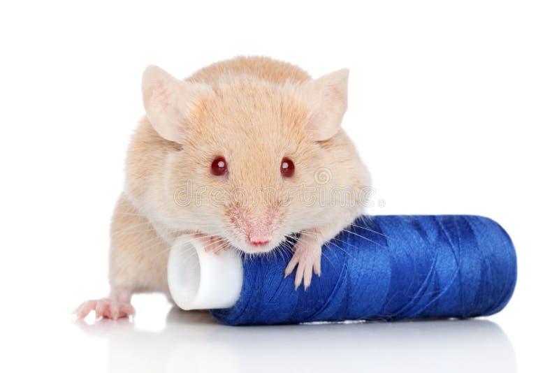 Ratón decorativo foto de archivo