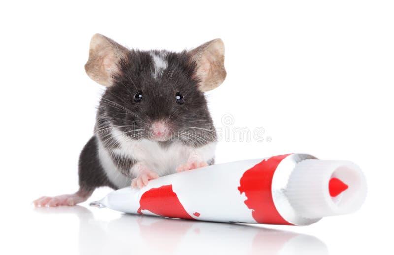 Ratón decorativo en el fondo blanco imágenes de archivo libres de regalías