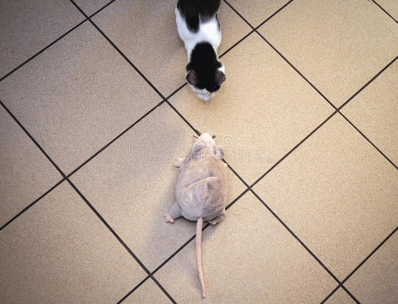 Ratón del gato y del juguete imagen de archivo