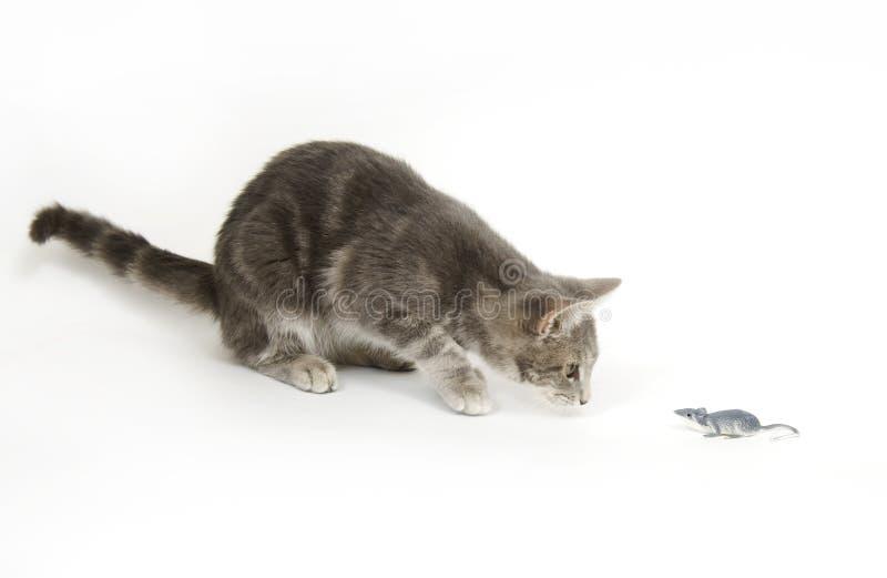 Ratón gris del gatito y del juguete imágenes de archivo libres de regalías