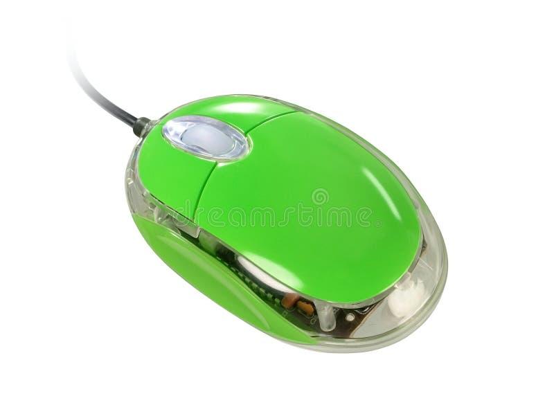 Ratón verde fotos de archivo libres de regalías