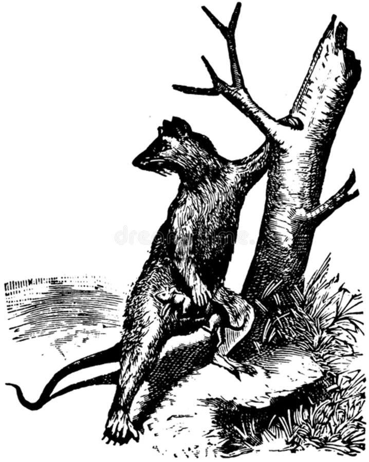 Rat-005 Free Public Domain Cc0 Image