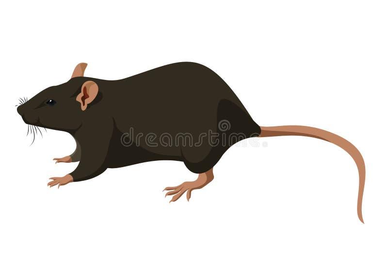 Rat royalty-vrije illustratie