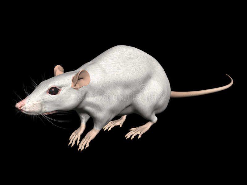 rat illustration stock