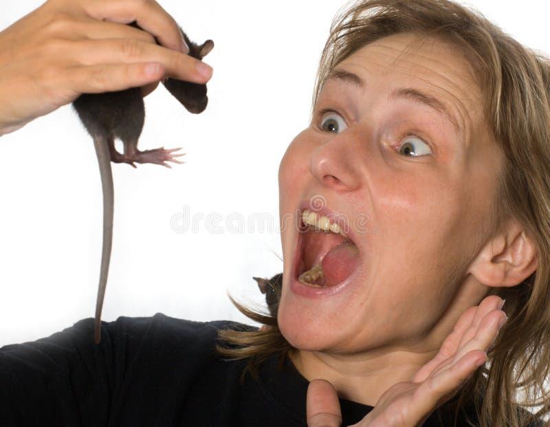 Rat ! image libre de droits