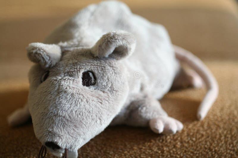 Download RAT stock image. Image of tail, animals, animal, hunter - 439337
