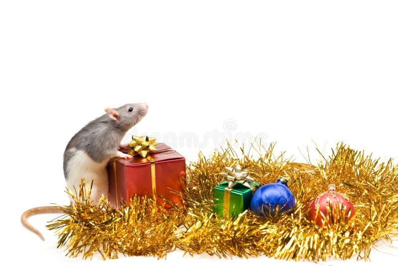 Rat avec des cadeaux de Noël images libres de droits