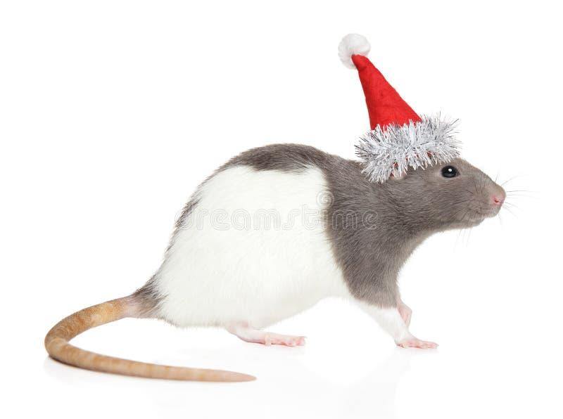 Rat décoratif dans le chapeau de Santa Red images stock