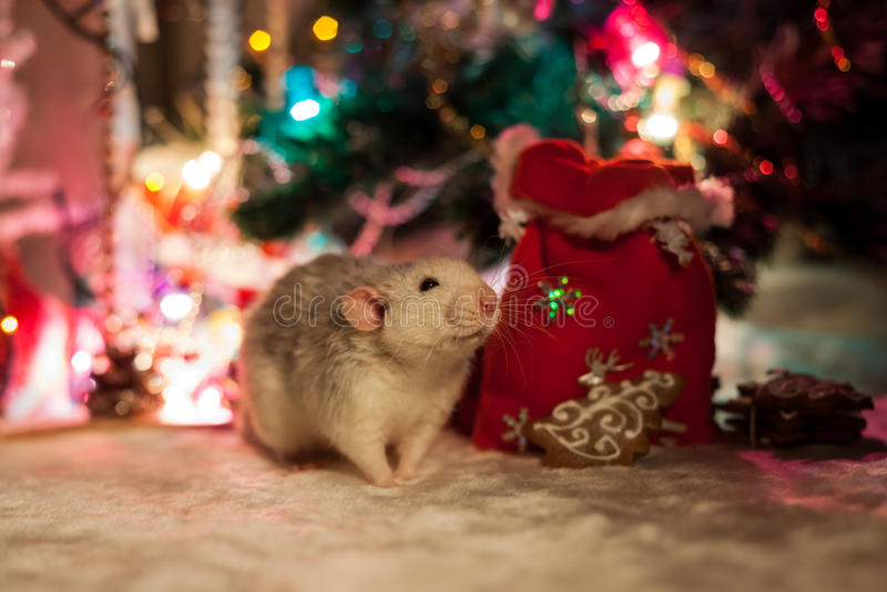 Rat décoratif sur un fond des décorations de Noël images stock